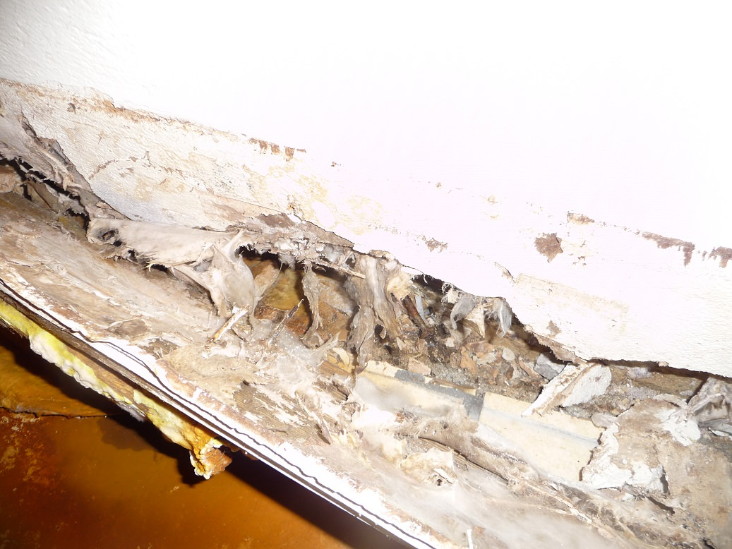 how can Barnsley damp proofing help?