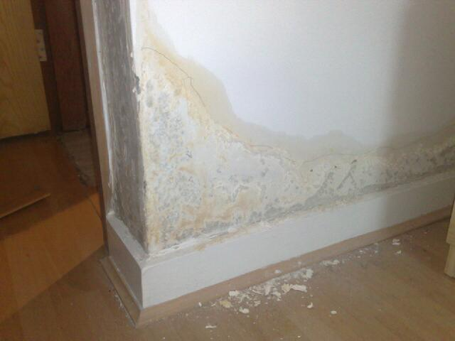 your local damp specialists in Barnsley