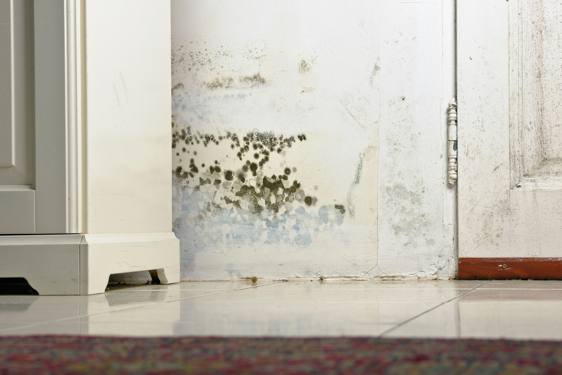 treatment for rising damp in barnsley
